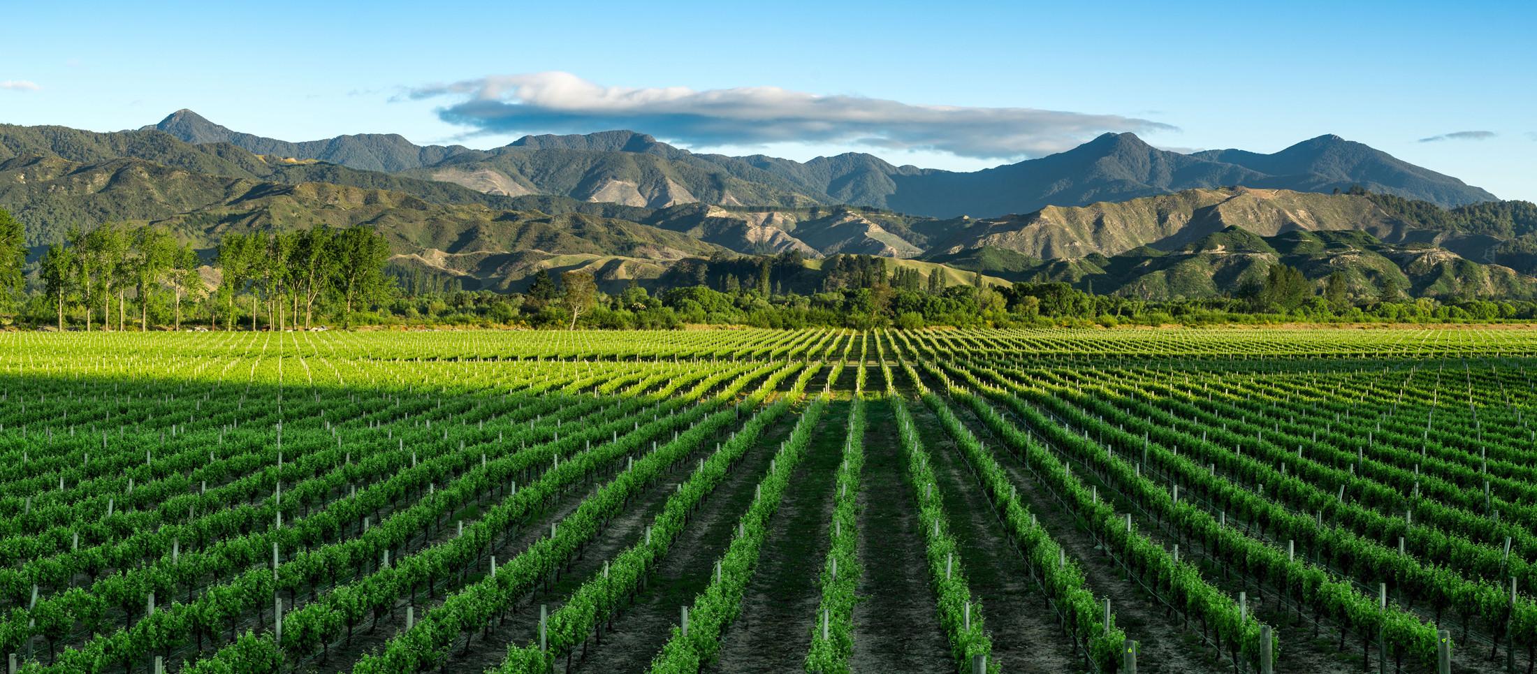 CB---Marlborough---Pinot-Noir-(Native)-[MHISWF142174-Revision-1]
